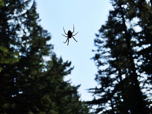Oregon6_1500px.jpg