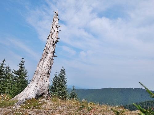 Oregon7_1500px
