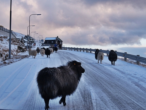 Färöarna15_1500px.jpg